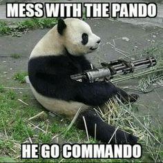 Pandas gone wild Funny Cute, Haha Funny, Really Funny, Hilarious, Funny Animal Memes, Funny Animals, Cute Animals, Angry Animals, Funny Bear Pictures