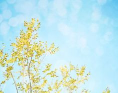 Effortless Summer Sky  Fine Art Photography- Fall Colors, Leaves, Nature, Yellow, Blue Sky, Dreamy Wall Decor - Good Morning