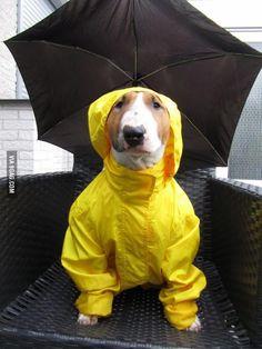 Ready for the rain.