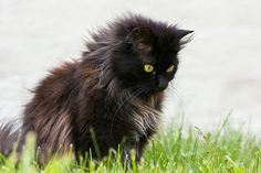 10 Most Friendly Cat Breeds in The World