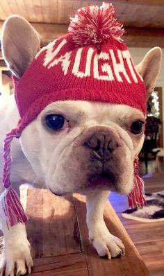 """NAUGHTY?""... ""I'm sure I'm only misunderstood"", funny French Bulldog at Christmas ❤️"