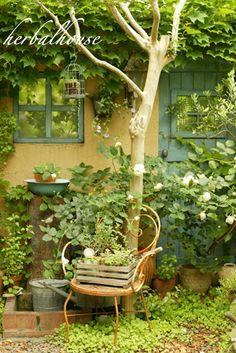 新緑の裏庭