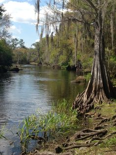 View of the Withlacoochee River from Stumpknocker's in Dunnellon, FL by mr