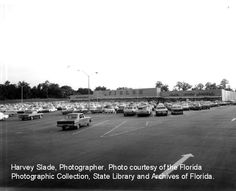 J.M. Fields Department Store worked 1975-1977 in Winter Haven, Fl (similar)