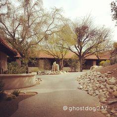 Great sights for a morning walk   The Westin La Paloma Resort & Spa