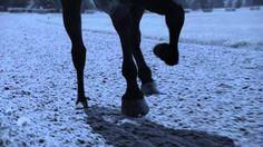 ▶ Longines presents Horse Racing 2014