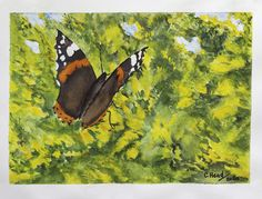 Red Admiral butterfly on yellow gorse Watercolour, Butterfly, Yellow, Red, Painting, Watercolor, Watercolor Painting, Painting Art, Paintings