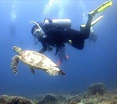 Gili - Jeff will get scuba certified so we can dive together!