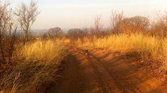 A new SavannaBel post - www.savannabel.com #nature #writing #PowerofNow