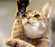お家芸も… -ネコ写真・猫画像の投稿コンテンツ - ネコ写 - ネコジルシ