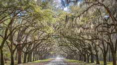 The Top 10 Most Photographed Places in Savannah Visit Savannah, Savannah Georgia, Savannah Chat, Forsyth Park, Jekyll Island, Vacation Places, Places To See, Cool Photos, Low Country