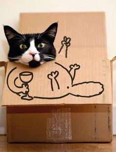 Funny Cat Box