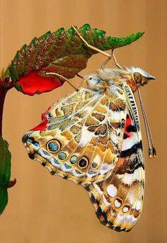 Pintado momentos la madre naturaleza Lady butterf