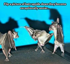 Those are some sassy bats.
