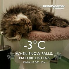 Just #relax and stay inside (don't need to lay on the #toilet though)  .. Its #cold outside!  Stay Warm /love Pärla ♡ #snuttanandparla #instaweather #instaweatherpro #sweden #kinna #weather #kittycat #thedailykitten #catsdaily #catlife #catlovers #persiankitten #persiancat #meow #bestmeow #meow_beauties #lazycats #lovemypet #catoftheday #gato #gattipersiani
