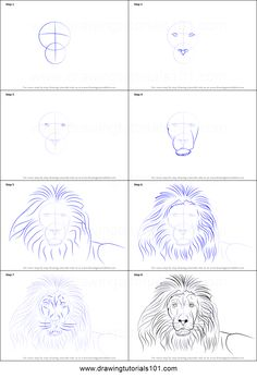How To Draw Realistic Lion Step By Step