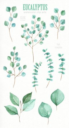 Eucalyptus Leaf Watercolor clipart Watercolor flower #watercolorarts