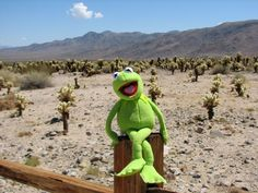 Kermit the Frog visits Joshua Tree! Great photoblog documenting a happy national park tourist. :-)