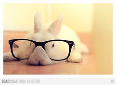 Hipster bunny wore nerd glasses before they were cool. this might be the cutest thing i've ever seen!