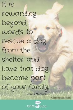 96 Best ❤♡Quotes About Rescue Dogs❤️♡ : images in 2019 ...