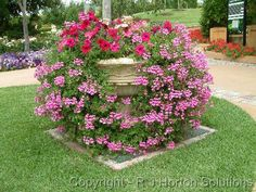 I love ivy geraniums! I think I'd eliminate the Petunias and add a spike instead, maybe something else, not sure yet.