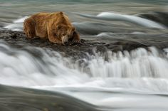 Just a bear, in a beautiful photo