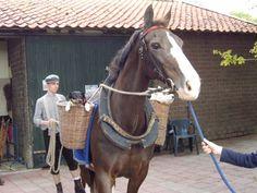 Cilady (Statuur x Nilady v. Irak) met Dion Romviel aan de lange leidsels tijdens de Open dag van de Ladyhoeve na de Erkenning als Fokcentrum Gelders Paard. Links in de mand Jacky, rechts Teun.