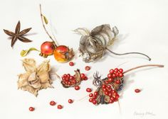 Beverly Allen Collection with Gloriosa lily seedpod, pomegranates and paper birch leaf Watercolour on vellum