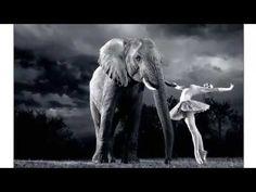 """Fujifilm X-Photographer Pierre van der Walt shooting Elephants and Ballerinas with the X-T2 - YouTube"