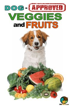 9 Veggies and Fruits are Good for Dogs. #dogdiet#dogfood#doghealthideas#doghealthtips#dogsandpuppies#puppycaretips#puppycareideas#dogcaretips#dogcareideas#dogsstuff#vegetablesandfruitsfordogs