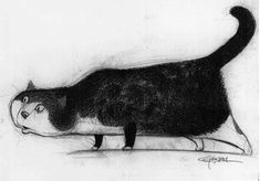 Illustration by Carter Goodrich Cat Character, Character Design, Illustrations, Illustration Art, Gatos Cat, White Cats, Black Cats, Cat Drawing, House Drawing