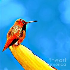 Rufous Hummingbird Painting Painting by Nadine and Bob Johnston - Rufous Hummingbird Painting Fine Art Prints and Posters for Sale