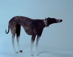 Ceramics by Anna Noel at Studiopottery.co.uk - Bird Sculpture, Animal Sculptures, Ceramic Figures, Ceramic Art, Dog Zodiac, Skinny Dog, Ceramic Animals, Weird Art, Contemporary Ceramics