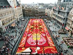 1,800 m² of begonias compose this flowery and gleaming stained-glass pattern in Brussels