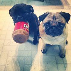 "rekkabecca84: Peanut butter bandits. ""It wasn't us. We found it this way."""