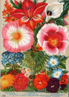 Lovely bold floral in great shades of pink, red, orange and burgundy. I love the cool blue accents.