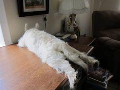 Rozetta Handley Beckman Brittain-Dissont's sleeping dog