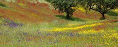 Les prairies colorées d'Alentejo portugal