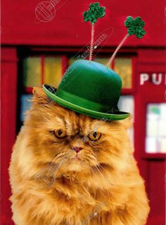Saint Patrick's Day Birthday Cat - This Kitty is 92-years old today! :)    #humor #cat #joke #animals
