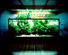 Nature Aquariums From Takashi Amano