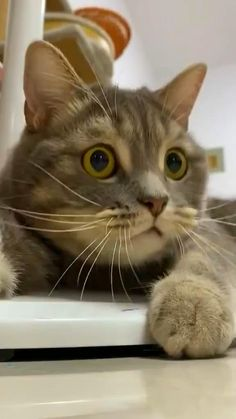 Cute Baby Cats, Cute Little Animals, Cute Funny Animals, Funny Animal Memes, Funny Animal Videos, Funny Cats, Chat Kawaii, Cat And Dog Videos, Pet Paws