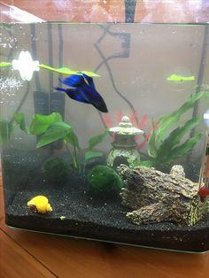 My 3 gallon curved glass Betta aquarium. ***Sponge filter comes tomorrow