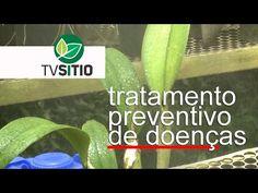 TRATAMENTO PREVENTIVO DE ORQUIDEAS