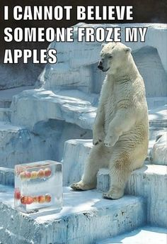 Can't believe someone froze my apples... 12 Best of Animals Humor Pictures - @mobile9 #animals #humor #funny