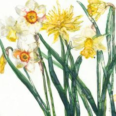 Nacrissus and Daffodil by Jess Trotman Beatrix Potter, Daffodils, Watercolor Flowers, Flower Art, Canvas Art, Greeting Cards, Create, Gallery, Artist