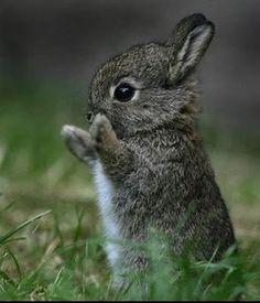 Adorable Bunny Rabbit.