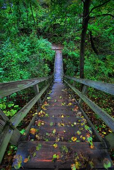 Starved Rock Stairs by Nasserorion, via Flickr