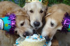 Brie and Tyler are eating all my birthday cake Mommy !