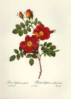 vintage floral art prints manzanita - Google Search