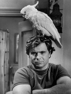 Actor Robert Blake turns 82 today - he was born 9-18 in 1933. Here he is with his cockatoo, Fred on his 70s TV series Baretta.